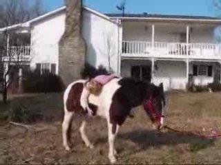 Девочка-псих.Часть 3.Бедная лошадь...