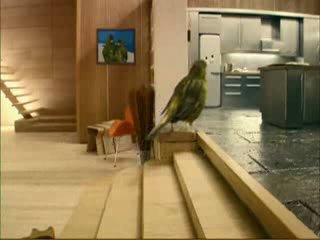 Еще одна умная птичка, или реклама сока)))
