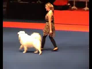 Танцы с самоедской собакой