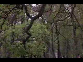 Фильм о разрушении Санкт-Петербурга