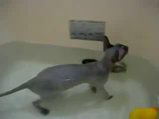 Кот или кошка в ванной