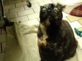 на 6 секунде кот говорит шпили-вили :D
