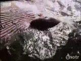 самая большая акула мегалодон