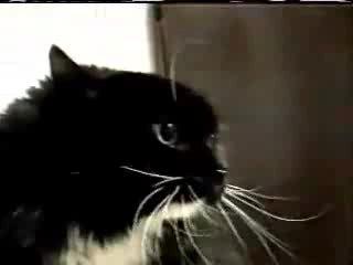 Ворчливый кот-ипохондрик