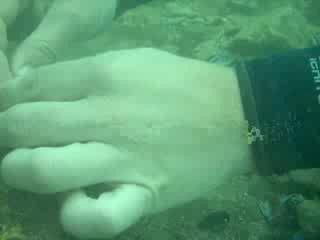 Я кормлю рыб (клуб Поиск)
