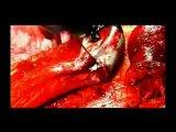 Bestial Devastation - Spl Mania