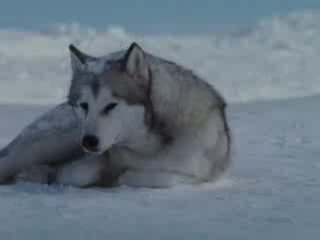 Gregorian ft. Sarah Brightman — In a Moment of Peace (Eight Below)