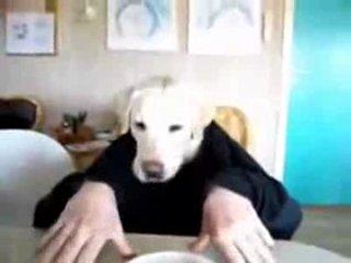 Собака завтракает за столом ))))))))))))