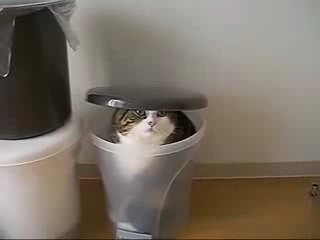 ЛЮБИТЕЛЯМ кошачьих ;)))