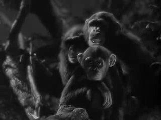 Тайное сокровище Тарзана /Tarzan's Secret Treasure 1941