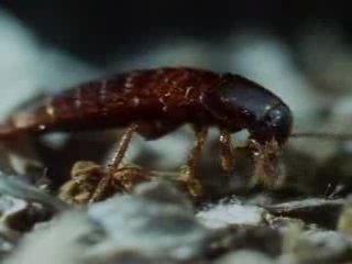 BBC Живая природа Эти загадочные животные