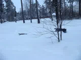 Охота на бегемота во Всеволожских снегах.