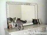 кот,няша,ржач,прикол,зеркало,стеб,умора,котэ,ржака,няшка,лапа,ахаха :)