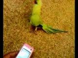 Приколы с животными. Попугай танцует электрик буги