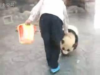 План побега панды. Ты отвлекаешь охранника, мы сбегаем!