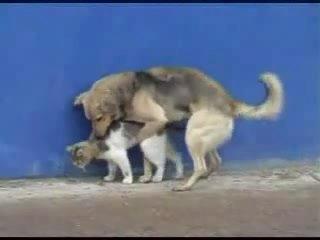 Котопёс [ CatDog ]