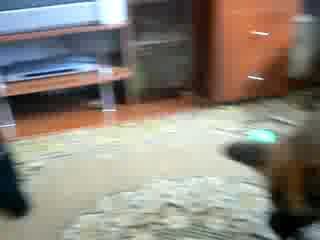 7летняя нем. овчарка Чара с усыпления !