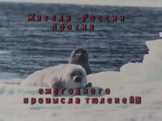 Скажем НЕТ охоте на тюленей!