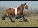 лошадки=)))))))Иго-го