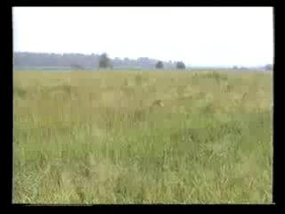 Охота на болотную дичь (обучающий фильм) [uroki-online.com]