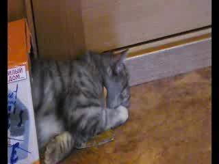 Клип про мою кошку Амели..:)))