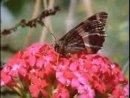 Тайная жизнь растений - Цветение (часть 3)