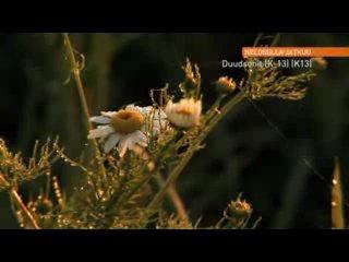 Горячие финские парни / The Dudesons ( сезон 2, серия 1 )