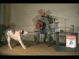 Собака играет на аккордеоне
