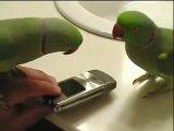 Попугаи разговаривают друг с другом )))
