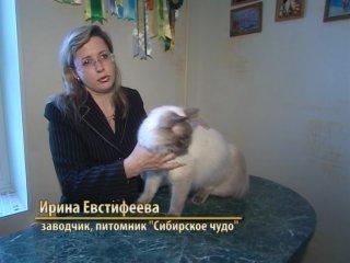 Кошачий алфавит