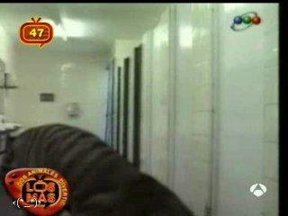 Жестокий розыгрыш Тигр в туалете