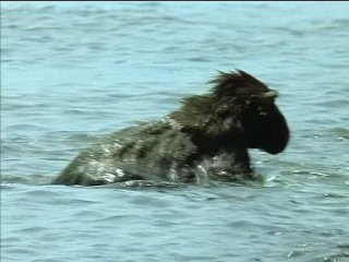 BBC: По странам и континентам. Дикая Африка / ВВС: Wild Africa (2001 г.) Фильм 1