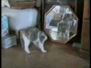 КотЭ,Кот,Кіт,мачка,приколи,котом ,котами,кішки,кішка,Супер,приколы,Ваще,смешно ,смех ,хахахах,Интересно,Кошак,кошака,Кошаки ,при