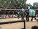 Тайланд. Нун Гнуч. Шоу слонов