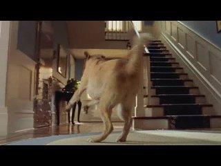 Кошки против собак /W-2 Клуб Фильмы про мальчишек .Films about boys.W-2 http://vkontakte.ru/club17492669