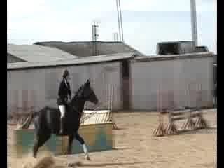 Лошадь без уздечки (седла и пр.). Волгоград.