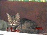 Кошка Машка - первая в проверке датчика движения.
