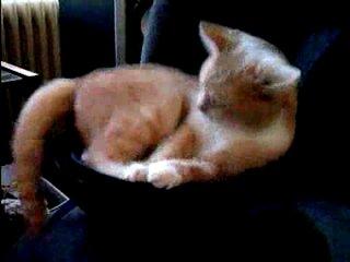 Кот на сабвуфере xDDDDDD ХаХаТун club18989201  » онлайн видео ролик на XXL Порно онлайн