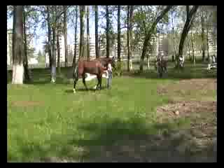 Наша любимка!Олимпия перед скачкой на Тверском ипподроме.