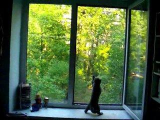 О пагубном влиянии на котят мультфильма