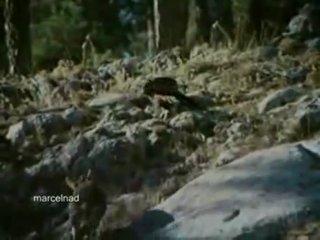 Орлы охотятся на ибексов