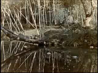 Abenteuer im Zauberwald(Морозко на немецком)