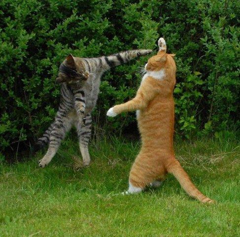 коты, наступпают