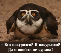 Оформленный Совами, 11 января , Макеевка, id9751239