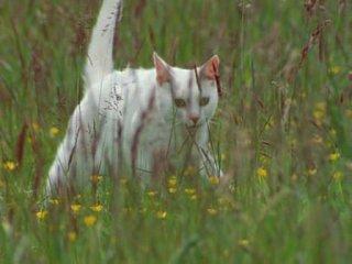 BBC: Загадочные кошки / BBC: The Cat Connection (2002) [HD by buran9]