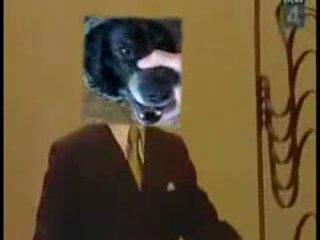 Собака бэбэ + Тролололо
