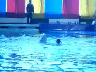 Дельфинарий 08.05.2010. Ласковый и нежный кит.