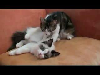 Сеанс чувственного эротического массажа