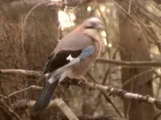 Гармония утра. Пение птиц в утреннем лесу.
