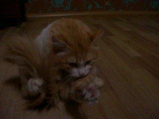 Мой котэ, посмотрите не пожалеете! Котэ Stify ахахахахахахахахах